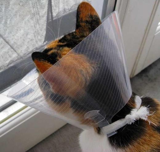 Katzenfütterung: Durchfall & Erbrechen - Tierernährung